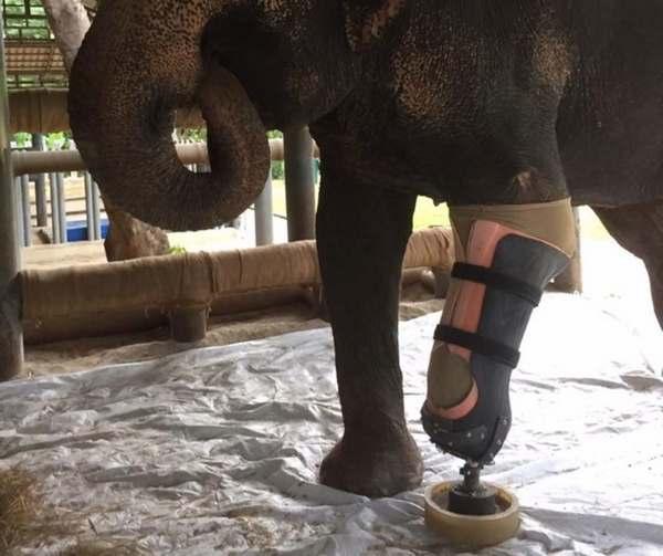elefanti protesi 3