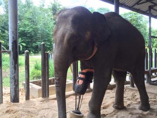 elefanti protesi 6