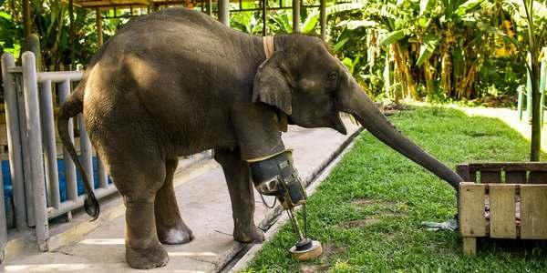 mosha elefante protesi