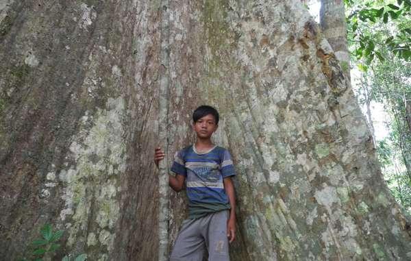 olio di palma indigeni3