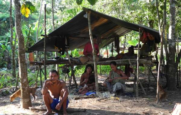 olio di palma indigeni 4