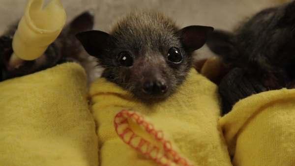 salvare pipistrelli 3
