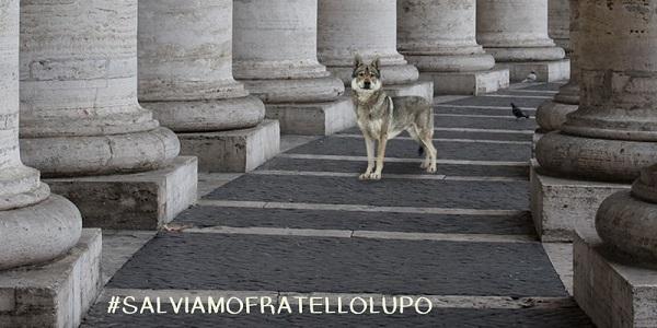 salviamo-lupi vaticano