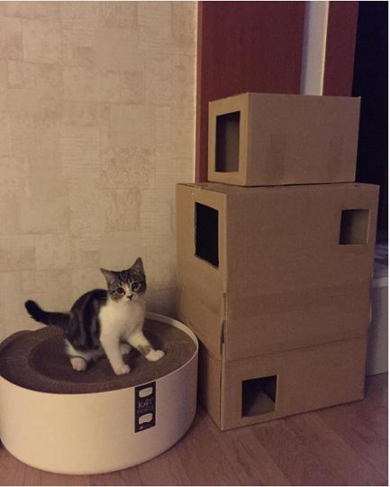 torre per gatti in cartone