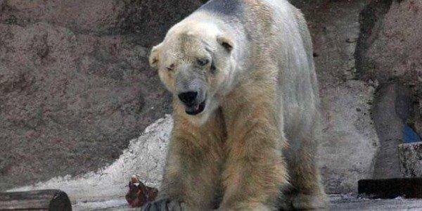 arturo orso zoo argentina