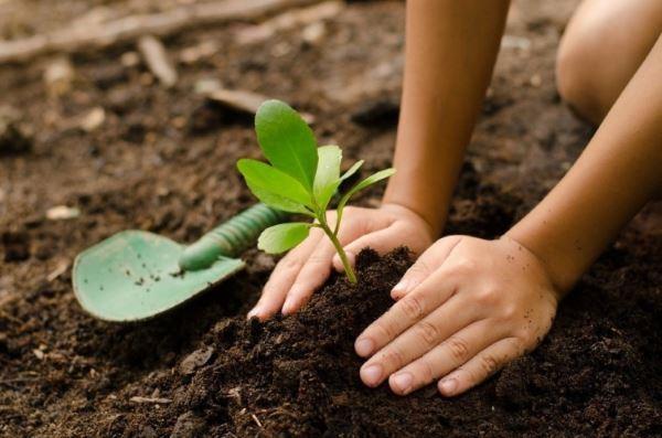 bambina pianta alberi3