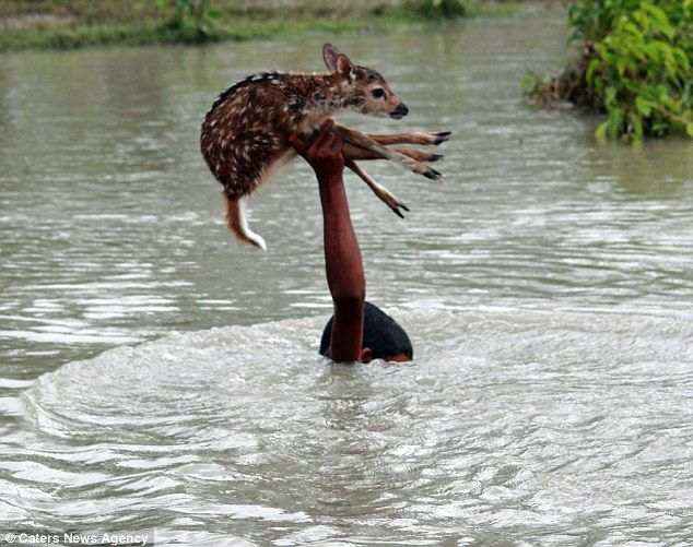 bambini salvataggio cerbiatto