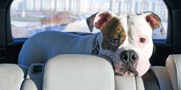 cane chiuso in auto cosa fare