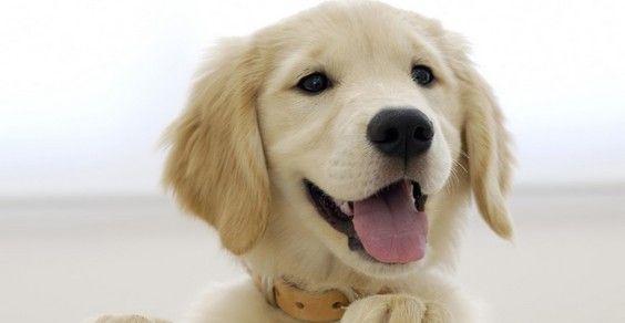 Cani lingua