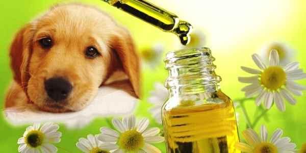 fiori-di-bach-nel-cane