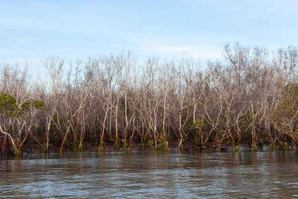 mangrovie australia 3