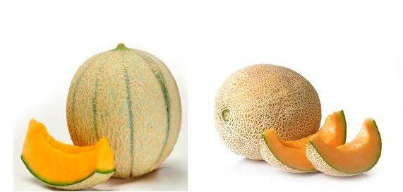 meloni cantalupo retati