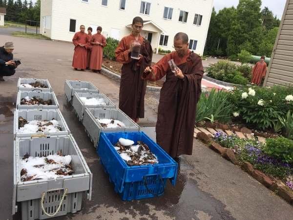 monaci buddisti aragoste 3