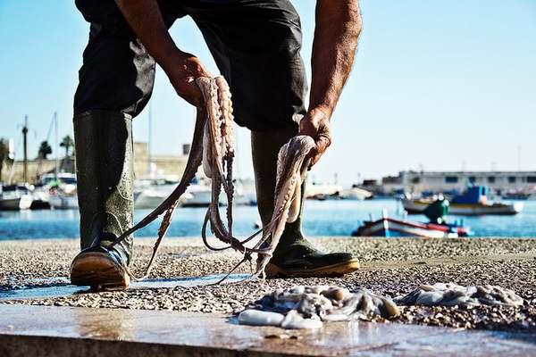 pesca polpi 5
