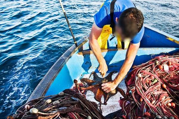 pesca polpi 6