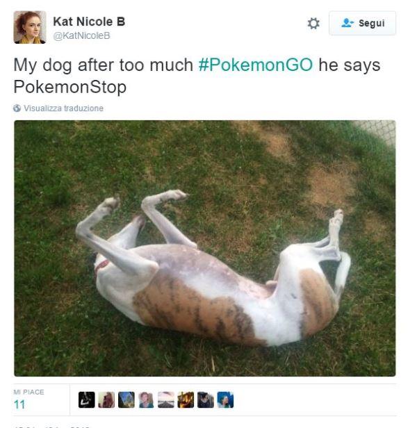 pokemoncani1