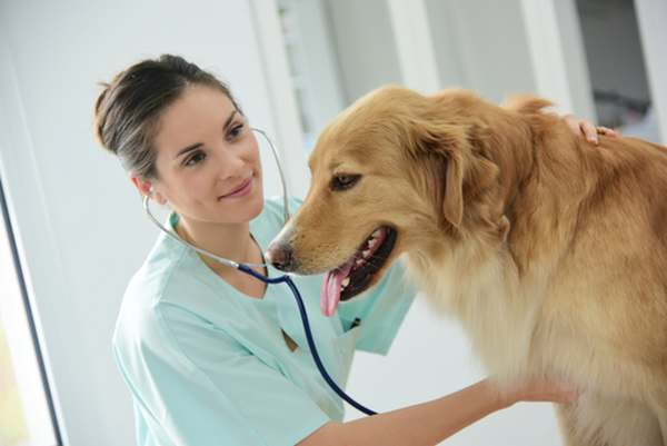 spese mediche animali 1