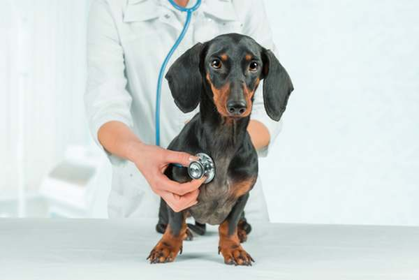 spese mediche animali 2