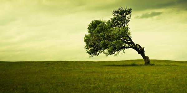 alberi comunicano