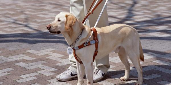 cane guida non vedenti