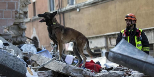 cani amatrice terremoto