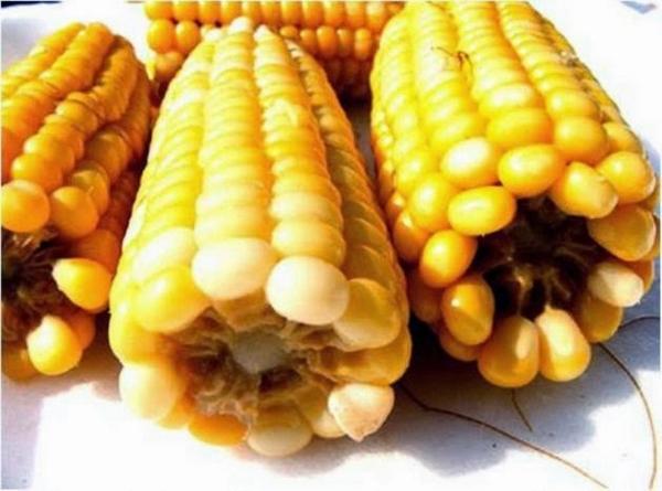 pannocchie di mais arrostite