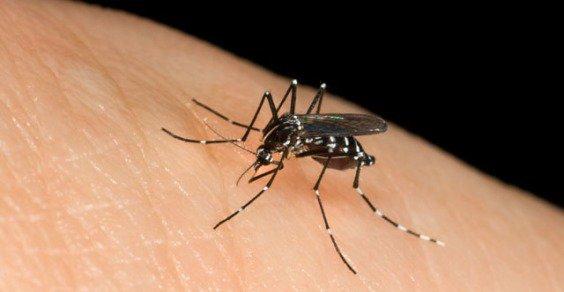 Zanzare rimedi