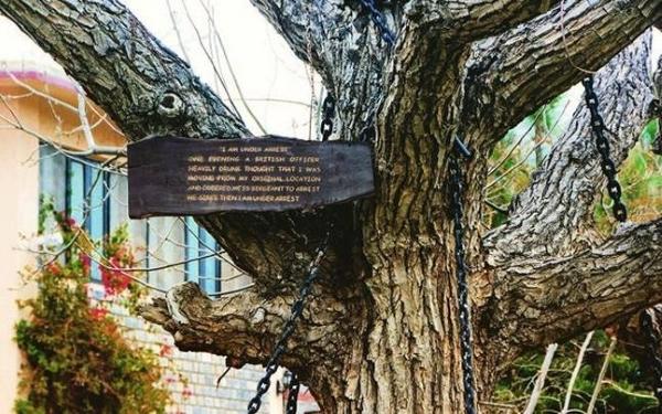 albero arrestato2