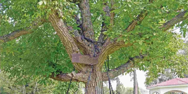 albero_arrestatocover