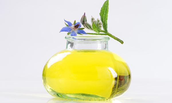 borragine olio
