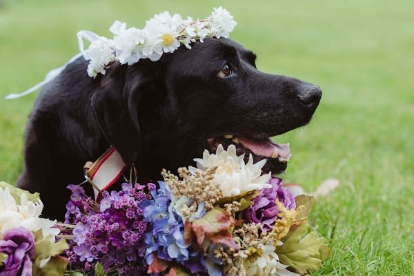 cane 15 anni matrimonio