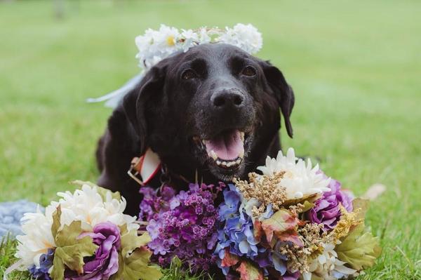 cane 15 anni matrimonio8