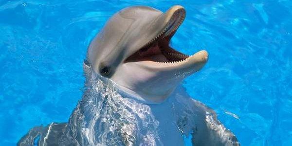delfini comunicazione