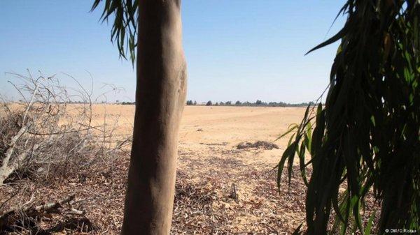 foresta deserto 2