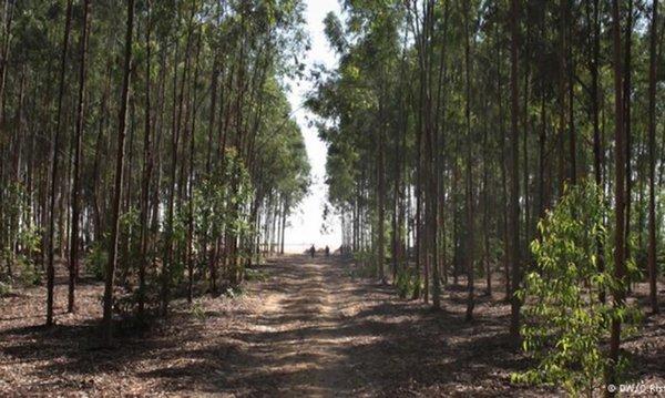 foresta deserto 3