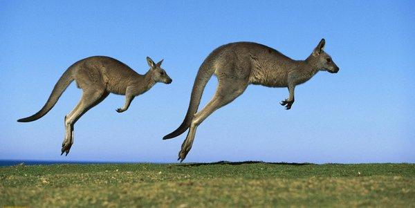 isola dei canguri - rinnovabili