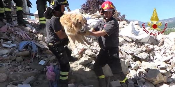 cane romeo terremoto