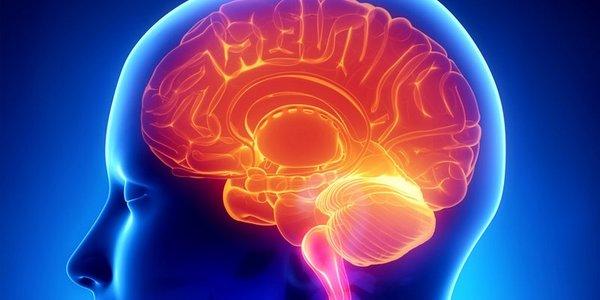 smog cervello