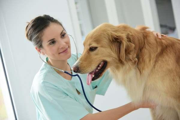 Spese mediche animali