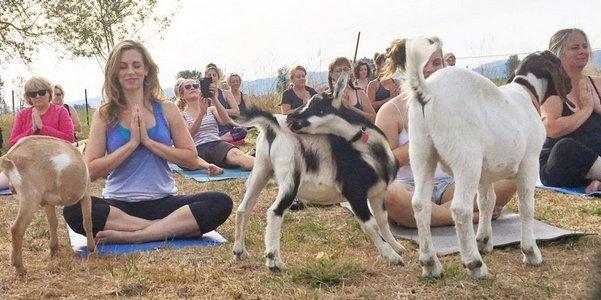 yoga capre