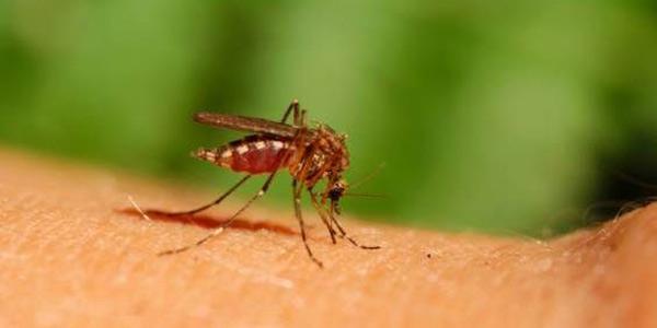 zika-zanzare-cose-da-sapere