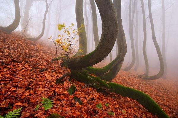 alberi intelligenti 2