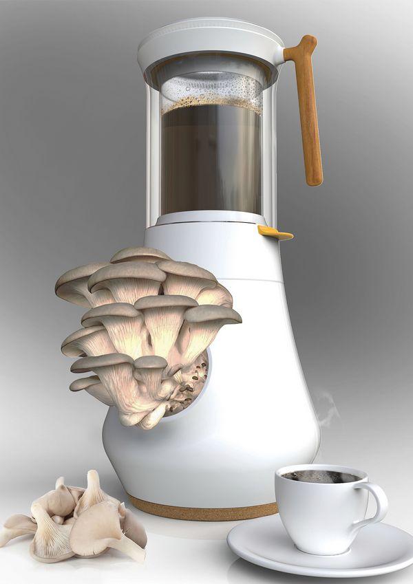 caffe funghi 2