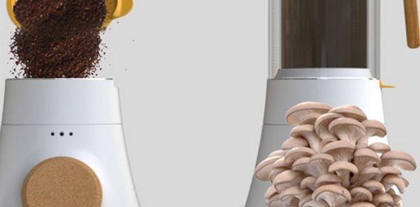 fondi di caffè funghi