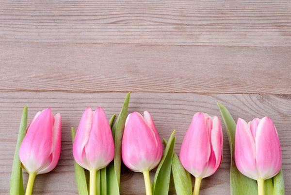 coltivare tulipani 1