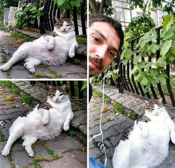 gatto statua 1