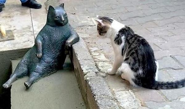 gatto statua 5
