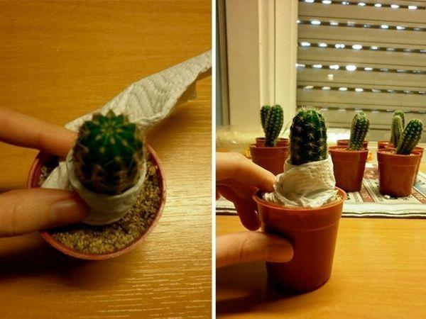 innesto cactus 2