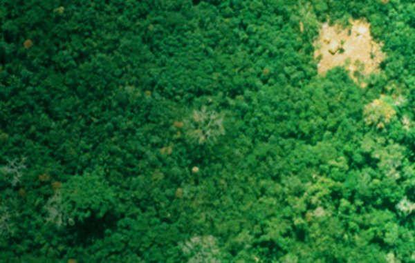 tribu brasile 3