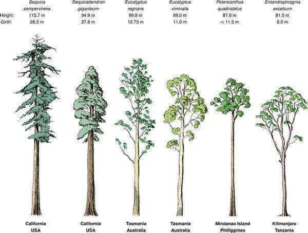 alberi africa 2
